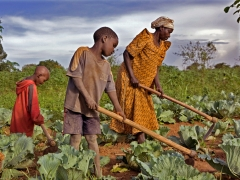 agriculture1_cameroun.jpg