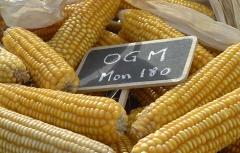 OGM MON 810.jpg