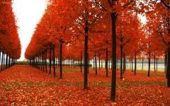 parc-en-automne.jpg